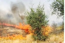 5 هکتار از باغات مثمر و مزارع اردل در آتش سوخت