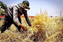 پرداخت بهای گندم خریداری شده از زارعان مدیریت شود