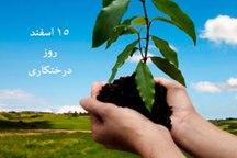 آیین روز درختکاری در یزد برگزار شد