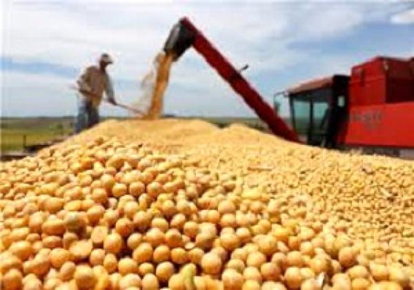 خرید بیش از 4000 تن سویا در مازندران