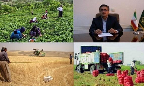 طرح ایکاردا تضمینی در تولید غلات کردستان است