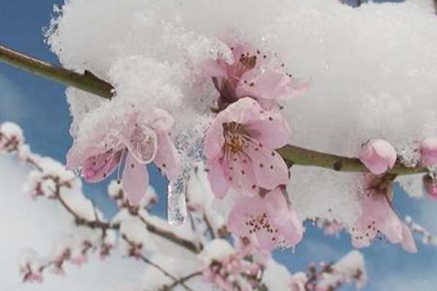 سرما 98 میلیارد ریال خسارت به باغات محلات وارد کرد