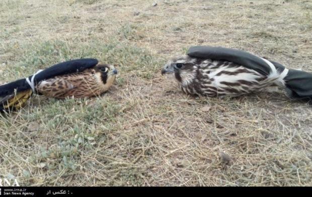 شکارچی متخلف در نمین به حبس تعزیری محکوم شد