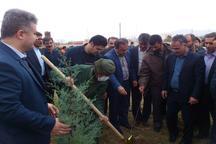 کاشت 400 اصله نهال در ابهر به یاد شهدای این شهرستان