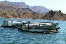 ذخیره سازی ۸هزار بچه ماهی درقفس های مستقر شده در سدکارون ۴