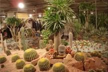 475 میلیون گل و گیاه زینتی در محلات تولید شد