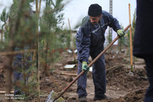 کاشت ۵۰ هزار اصله درخت در طرح «گوزل تبریزیم»