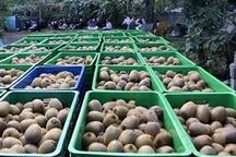 رشد 235درصدی صادرات کیوی از گمرکات مازندران طی 9 ماهه سال 97