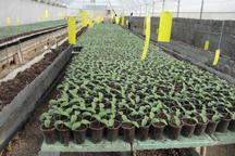 37 هکتار گلخانه در خراسان شمالی ساخته شد