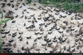 هجوم ملخها به اراضی کشاورزی قم  مزارع و باغات استان در معرض تهدید