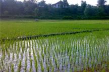 افزایش بهره وری آب، نیاز جدی کشاورزی گلستان