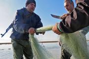 تورهای غیرمجاز ماهیگیری از تالاب گمیشان جمع آوری شد