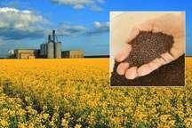 یک هزار و 483تومان تفاوت قیمت،عامل اختلاط دانه روغنی وارداتی با تولید داخلی