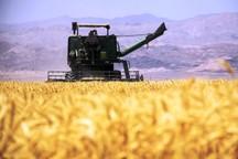 سهم صادرات کشاورزی همدان در کشور چهار درصد است