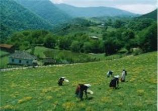 رضوانشهر از مناطق گردشگر پذیر استان گیلان محسوب می شود