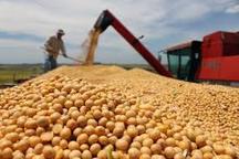 برداشت سویا از هفته آینده آغاز میشود تولید 45 هزار تن دانه روغنی سویا در اردبیل