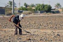 جرائم وام های کشاورزان خسارت دیده فارس بخشیده شد