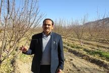 مدیر باغبانی جهاد کشاورزی :400 تن گیاهان دارویی در استان یزد برداشت شد