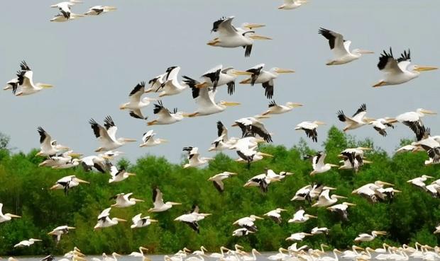 40 هزار پرنده مهاجر در تالاب های شوش فرود آمد