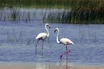 100 نوع پرنده در تالاب سولدوز زیست می کنند