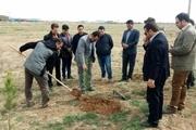 غرس 1000 اصله نهال توسط مجرم محیط زیستی در تاکستان