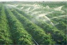 میزان تولید محصول در اراضی آبی البرز افزایش یافت