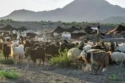 9میلیارد تومان تسهیلات به عشایرسیستان و بلوچستان اعطا شد