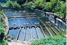 طرح پرورش ماهی خاویاری در سرعین کلید خورد