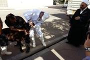 دامپزشکی کردستان بر ذبح ۳۰۳ راس دام در ایام عزاداری نظارت کرد