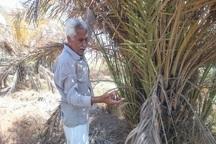 کشاورزان مینوشهر همچنان در انتظار طرح یکپارچه سازی مزارع اند