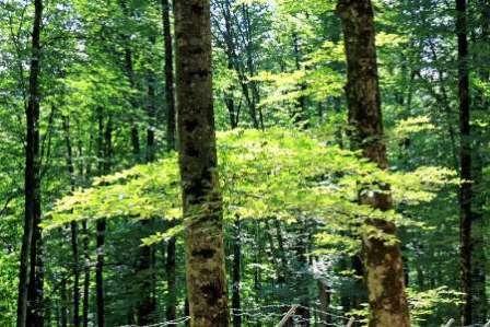 لرستان رتبه نخست کشوری جذب همیار طبیعت را کسب کرد