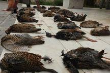 شکارچیان ۴۲ قطعه دراج در خوزستان به دام افتادند