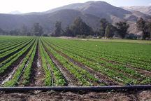 ۲ هزار هکتار از مزارع سیبزمینی اردبیل به روش نوین آبیاری شد