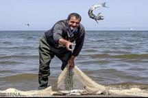 صید ماهیان استخوانی در گلستان 18 درصد بیشتر شد