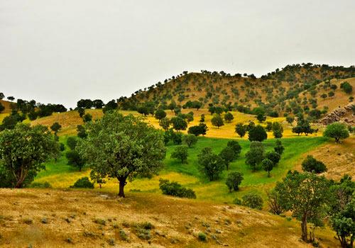 راهاندازی تریل کوهستان در منطقه هلن چهارمحال و بختیاری