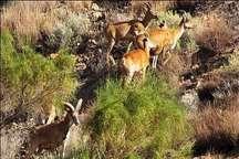 آماربرداری از حیوانات پارک ملی گلستان آغاز شد