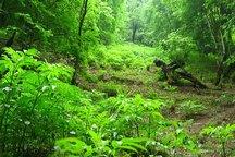 30 درصد اعتبارات مصوب جنگل کاری سمنان تخصیص یافت
