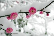 برف و سرما در برخی مناطق خراسان رضوی به کشاورزان خسارت زد