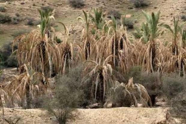 تاثیر خشکسالی بر کشاورزی و آب شرب بوشهر