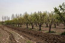 سپردن نهالکاری بخشی از باغ تاریخی سیب کرج  به مردم