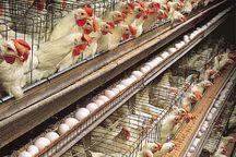 ۳ طرح مرغ تخمگذار و گوشتی در کهگیلویه و  بویراحمدافتتاح شد