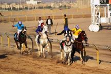 مسابقات اسبدوانی کورس پاییزه کشور در یزد پیگیری شد