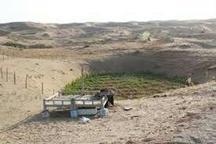 آغاز برداشت هندوانه دیمی در دل کویر مرکزی ایران