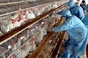 نمین رتبه اول تولید تخممرغ خوراکی استان اردبیل را کسب کرد