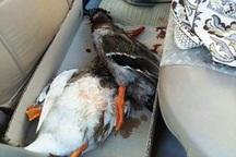2 شکارچی پرندگان مهاجر در منطقه سراب قروه دستگیر شدند