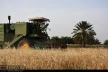 19 هزار تن گندم در گیلانغرب برداشت شد
