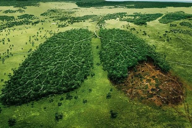 درخت هایی که می نشانیم