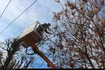 هرس 10هزار اصله درخت در بروجرد آغاز شد