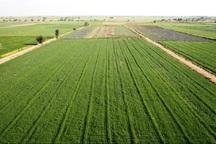 طرح آمایش اراضی کشاورزی جنوب تهران باید اجرا شود