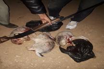 سه شکارچی غیر مجاز حیات وحش در ملکشاهی دستگیر شدند
